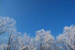 Weiße Bäume Stockbild