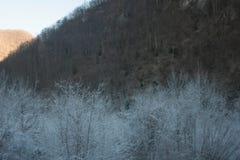 Weiße Bäume Lizenzfreie Stockbilder
