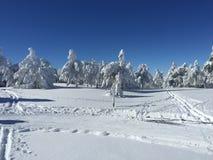 Weiße Bäume nachdem dem Schneien Stockfotografie
