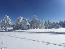 Weiße Bäume nachdem dem Schneien Lizenzfreie Stockbilder