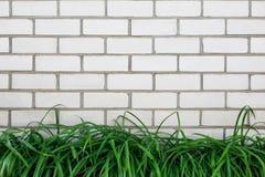 Weiße Backsteinmauer mit hellgrünem Gras draußen im Park Alte Backsteinmauer Stockbilder