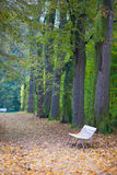 Weiße Bank im Herbstpark Stockfotos