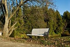 Weiße Bank mit Wald und Teich auf dem Hintergrund Stockfotografie