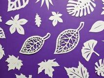 Weiße Baumblätter Weiß schnitt Papier mit Blumen auf schwarzem Hintergrund Stockbild