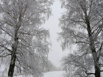 Weiße Baumniederlassungen im Frost im Winter Lizenzfreie Stockfotos