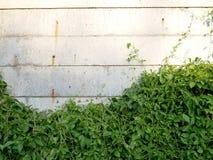 Weiße Betonmauer mit kletterndem Baum für Hintergrund Lizenzfreie Stockfotografie