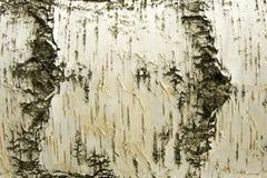Weiße Birken-Hintergrund Stockbilder
