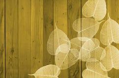 Weiße Blätter von bodhi auf hölzernem Lattenhintergrund Lizenzfreie Stockfotos