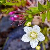 Weiße Blüte Stockfotografie