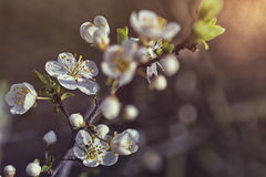 Weiße Blüte Lizenzfreie Stockfotografie