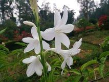 Weiße Blüte Stockbilder