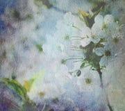Weiße Blüte auf altem Papier Lizenzfreie Stockfotos