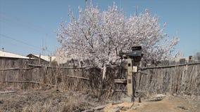 Weiße Blüten und unfruchtbare Landschaft stock video