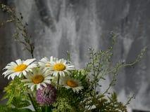 Weiße Blütenblume auf grauem Hintergrund Kopieren Sie Platz Stockfoto
