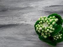 Weiße Blütenblume auf grauem Hintergrund Kopieren Sie Platz Lizenzfreie Stockfotos