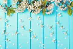 Weiße Blütenblumen auf blauen hölzernen Hintergründen Lizenzfreies Stockfoto