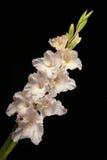 Weiße Blume Lizenzfreie Stockbilder