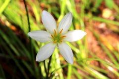 Weiße Blume Stockfoto