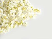Weiße Blume Stockbild