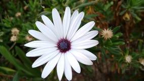 Weiße Blume Lizenzfreies Stockbild