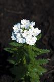 Weiße Blume Stockfotos