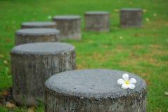 Weiße Blume auf dem Steinsitz Stockfotografie