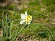 Weiße Blume auf grünem Hintergrund stockfotos