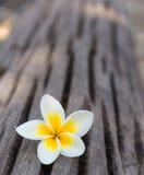 Weiße Blume auf hölzernem Hintergrund Stockbilder