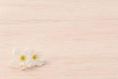 Weiße Blume auf hölzernem Hintergrund Lizenzfreie Stockfotografie