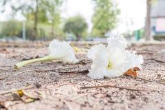 Weiße Blume auf sandigem Boden Stockbild