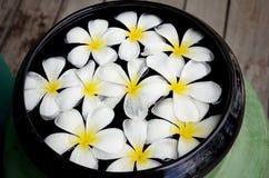 Weiße Blume auf Schüssel Stockbild