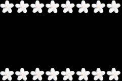 Weiße Blume auf schwarzem Hintergrund Stockfotos