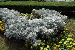 Weiße Blume begleitet von der gelben Lilie Lizenzfreies Stockfoto