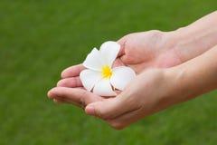 Weiße Blume in der Hand Stockfotografie