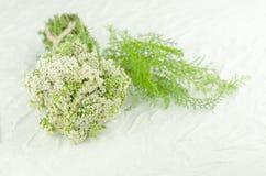 Weiße Blume der Schafgarbe Achillea-millefolium mit weißen Blumen auf einem Holztisch Stockfotos