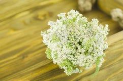 Weiße Blume der Schafgarbe Achillea-millefolium mit weißen Blumen auf einem Holztisch Lizenzfreie Stockbilder