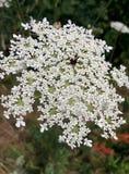 Weiße Blume in der Sonne Lizenzfreie Stockbilder