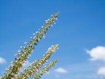 Weiße Blume des höheren Fokus auf Hintergrund des blauen Himmels Lizenzfreie Stockfotos