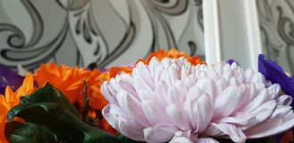 Weiße Blume eingefroren im Moment stockbilder