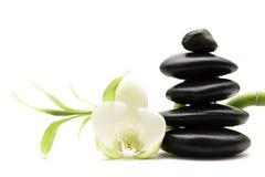 Weiße Blume, grüner Bambus und schwarze Steine Lizenzfreies Stockbild