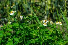 Weiße Blume hinter den grünen Bäumen Stockbilder