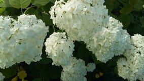 Weiße Blume im Garten Lizenzfreies Stockfoto