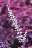 Weiße Blume im purpurroten Hintergrund Stockfoto