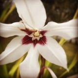 Weiße Blume im Wald Lizenzfreie Stockfotografie