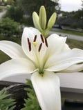 Weiße Blume im Wald Stockfotos