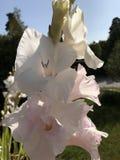Weiße Blume im Wald Stockbilder