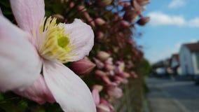 Weiße Blume im Wald Lizenzfreie Stockbilder