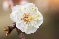 Weiße Blume im Wald Stockfotografie