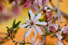 Weiße Blume im Wald Stockbild