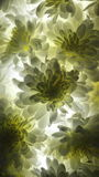 Weiße Blume @Lights stockbilder